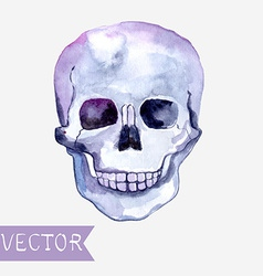 Watercolor skull background vector image vector image