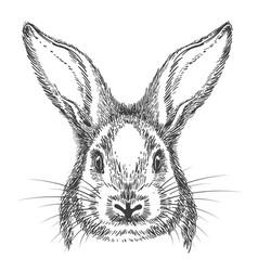 vintage hand drawn bunny face sketch vector image vector image