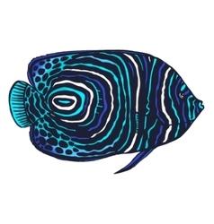 Colored of emperor angelfish vector