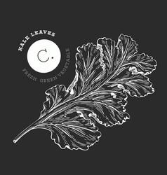 hand drawn sketch style kale salad organic fresh vector image