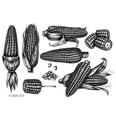 set hand drawn black and white corn vector image