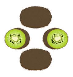 whole ripe fruit kiwi vector image