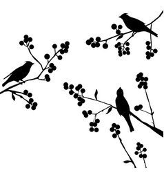 birds on the branch - set of elements vector image