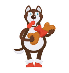 husky dog in red boots holds huge bone in ribbon vector image