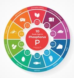 10 foods high in phosphorus vector
