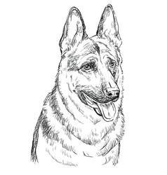 German shepherd hand drawing portrait vector