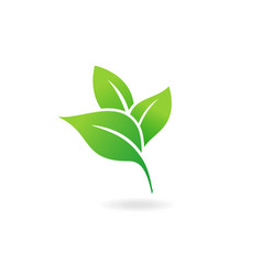green leaf icon ecology icon vector image