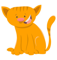 Kitten animal character vector