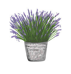 Lavender in a bucket style provence vector