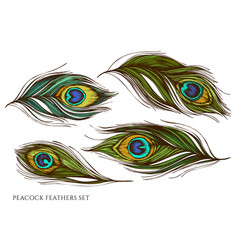 set hand drawn colored peacock feathers vector image