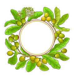 shea branches frame on white background vector image