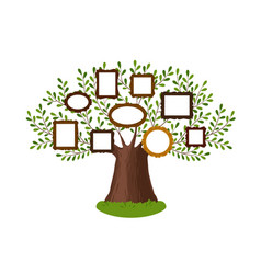 genealogical family tree with picture frames vector image