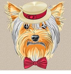 hipster dog Yorkshire Terrier vector image