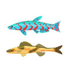 cirrhitops fasciatus fish set vector image
