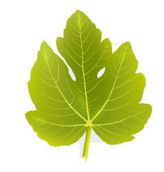 Fig leaf vector image