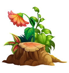 Flower and stump wood on white background vector