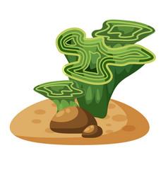 marine green algae seaweed plant underwater vector image