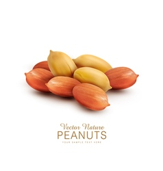 peanut kernels isolated on a white background vector image