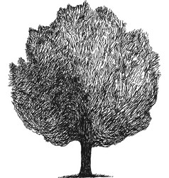 simple sketch of a tree vector image
