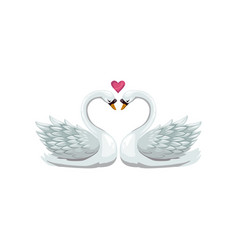 swan birds in love isolated vector image