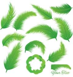 Coconut Leaf vector image
