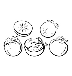 Fruits Persimmon Black Pictograms vector image vector image