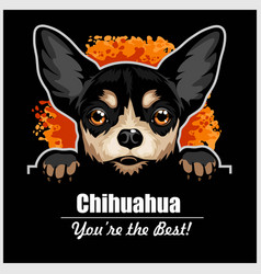 Chihuahua - peeking dogs - breed face head vector