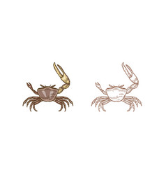 Fiddler crab set colorful vector
