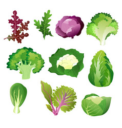 green salad leaves vegetarian healthy food vector image