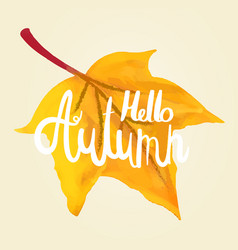 hello autumn calligraphy hand on a maple leaf vector image