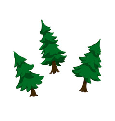 isolated image firs green pine vector image