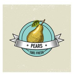 pear vintage hand drawn fresh fruits background vector image