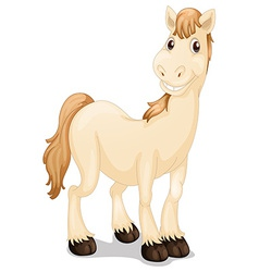 A cute horse vector image