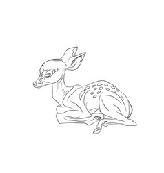 baby deer lying lines vector image