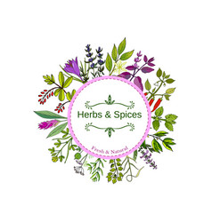 Culinary herbs and spices hand drawn set vector