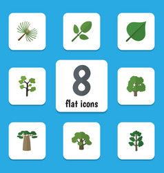 Flat icon nature set of hickory decoration tree vector