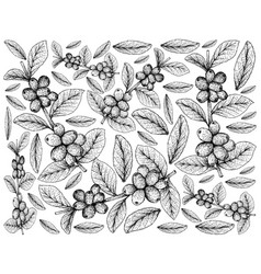 Hand drawn background of ripe coffee berries on br vector