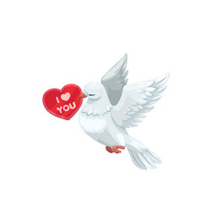 heart shape card and white dove vector image