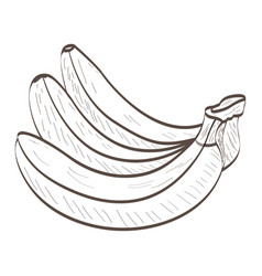 isolated bananas outline vector image