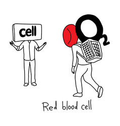 Metaphor function of red blood cell to transport vector