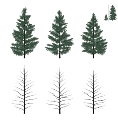 young firs set in flat colors vector image