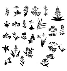 flowers set collection vector image vector image