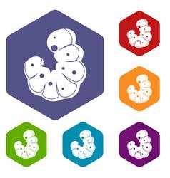 worm icons set hexagon vector image