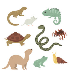 Exotic pets collection on white background vector