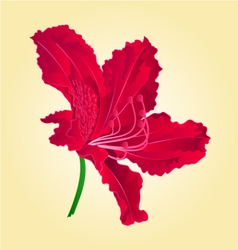 Flower red simple rhododendron vector