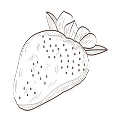 isolated strawberry outline vector image