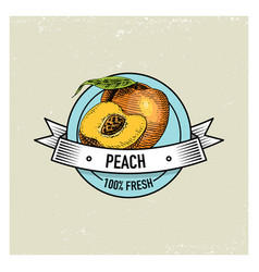 Peach vintage hand drawn fresh fruits background vector
