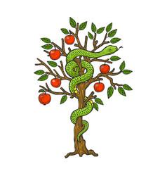 Serpent on apple tree sketch vector