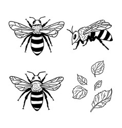 Set with bees and leaves hand drawn vector
