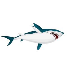 Shark big dangerous marine predator toothy vector